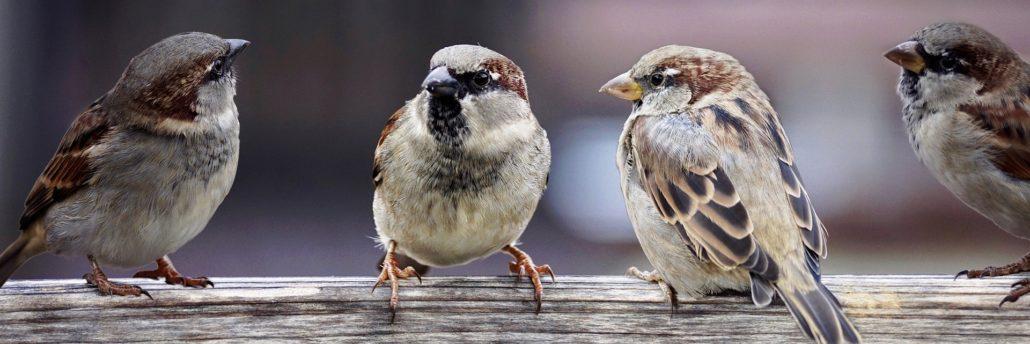 Sapersi Ascoltare Saper Parlare Due Regole Di Rodari Per I Social