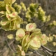 fiori colli bolognesi